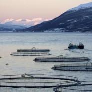 Depotalarm: Bakkafrost wieder voll im Netz!